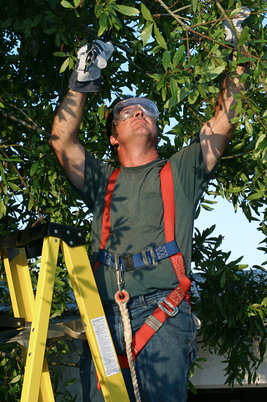 Tree Pruning and Tree Surgeon Edmond OK - Edmond Tree 820 W Danforth Rd #A-46A Edmond OK 73003 (405) 562-5725   https://plus.google.com/+Edmondtree/about